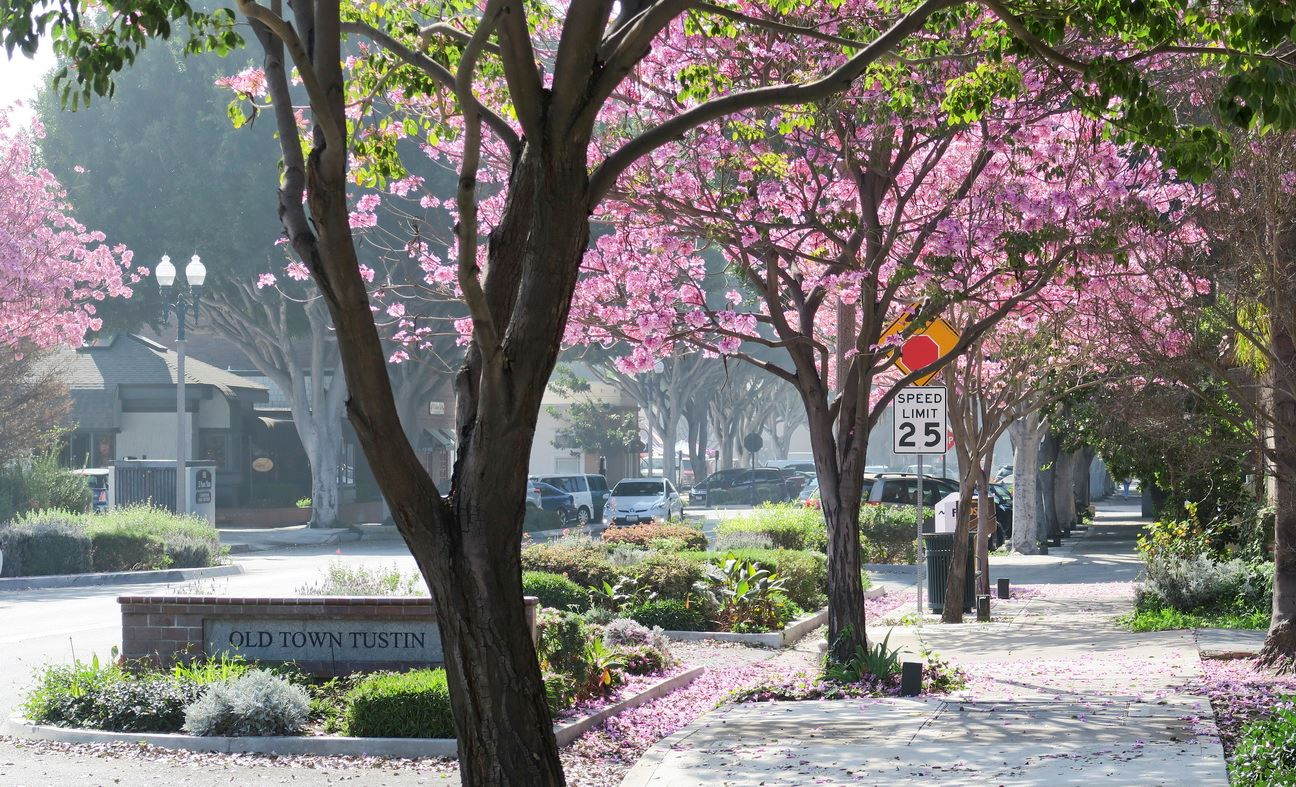 Entrance of Old Town Tustin with Blooming Trees
